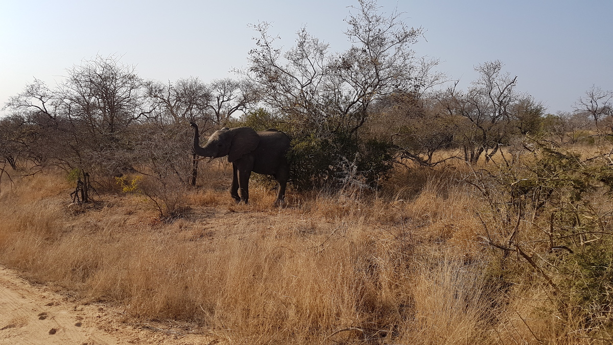 5 Wochen Backpacking durch Südafrika – meine Reiseroute und Highlights